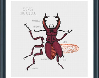 Stag Beetle cross stitch pattern - PDF downloadable pattern - anatomical - taxidermy - bug insect unusual