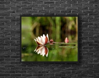 Water Lily Photo - Water Reflection - Pink Water Lily - Flower Photo - Botanical - Paper Photo Print - Flower Wall Art - Flower Wall Decor