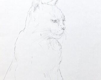 cat portrait- original drawing