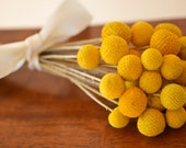 Billy balls, Bunch of billy balls,  Craspedia, Bunch of craspedia, Billy Buttons, Yellow Dried decor, modern wedding, wedding decor