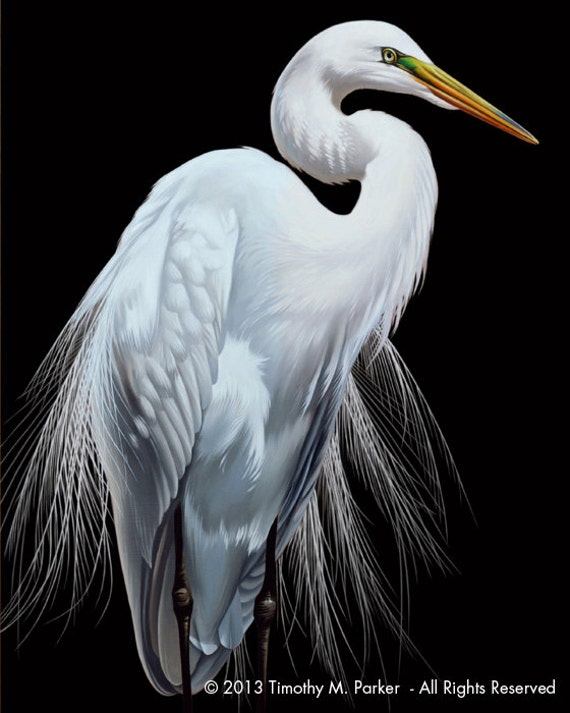 Contemporary egret painting reproduction patience tropical for White heron paint