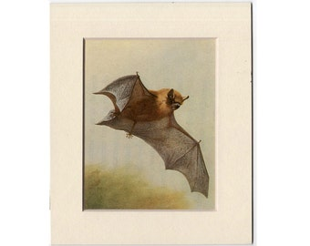 1960 mini flying bat original vintage lithograph print - matted crop from a larger print