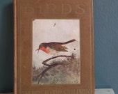 Birds Shown to the Children - Antique Edwardian Book on Ornithology - bird prints - M. K. C. Scott - vintage book colour plates
