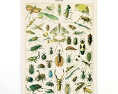 Pull Down Chart - Vintage Insects Diagram Reproduction Canvas Print. Variety of Insects Educational Chart by Millot Entomology Bugs CP255cvL