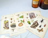 Books and Buttons Bunting - Wasps - Creepy crawler garland from repurposed book