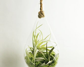 Air Plant Rope Terrarium // Your Choice of Moss Color