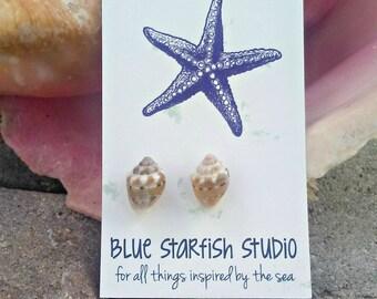 Seashell earrings,  beach jewelry, mermaid jewelry