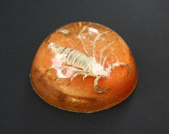 Scorpion paperweight, vintage paperweight