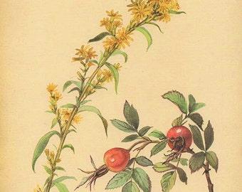 Vintage Edwardian Flowers Herbs 115 Botanical Print plant print botanical print bookplate art print 1970 plants wall art