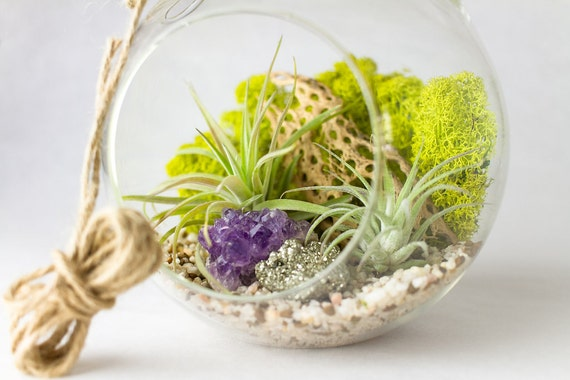 Air Plant, Amethyst Cluster, and Pyrite Terrarium Kit || Large Round Hanging
