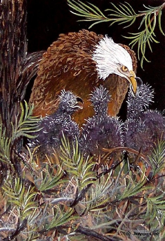20 X 24  Inch Eagle Giclee Print   Mamma And Babies