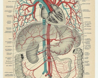 Print anatomy blood Hannibal entrails intestines bowels taxidermia poster vintage antique human body medical anatomic anatomical