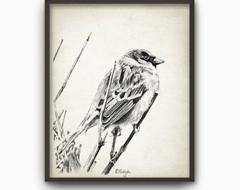 Sparrow Print from an Original Ink Drawing - Bird Wall Art - Hedge Sparrow Print - Nature - Biology Gift Idea - Sparrow Art Print - AB460