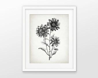 Antique Botanical Print - Aster Plant Illustration - Aster Flower - Aster Botanical Print - Drawing - Single Print #2102 - INSTANT DOWNLOAD