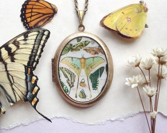 Lepidopterist Locket -  Vintage Naturalist Butterfly & Moth Illustration - Brass Locket Necklace