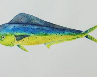 Watercolor Mahi Mahi or Dauphin