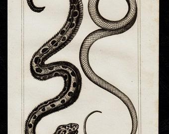 1832 Antique print of snakes, serpent engraving, snake, Original antique print