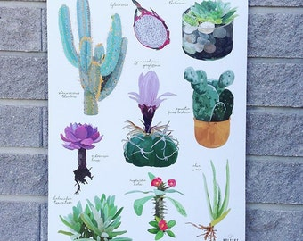 Hand drawn, illustrated Cactus & Succulent Hanging Print / Botanical print, chart, wall art