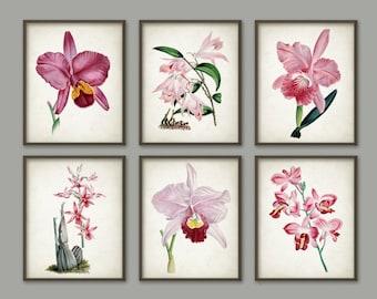 Antique Pink Orchid Botanical Print Set of 6 - Vintage Orchid Botanical Home Decor - Antique Book Plate Illustration - Plant Biology - AB484