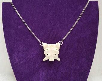 Real animal vertebrae bone necklace, taxidermy,
