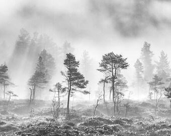 Fine Art Photo - Misty Forest