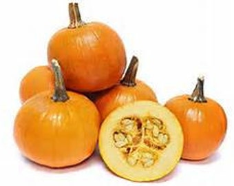 Baby Pam Sugar Pumpkin Seeds - 20 - Pumpkin Pie - Licensed Pennsylvania Seed Dealer