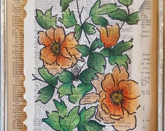 Ordbog: Moutan peony paeonia suffruticosa in ink and colored pencil