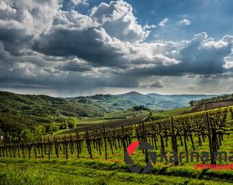 Beautiful Tuscan Vineyards, Tuscany, Toscana, Italian, Italy, Scenery, Travel, landscape, scenic, Photograph, print, wall art
