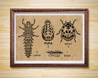 Larva print Insect poster Vintage animal bug decoration