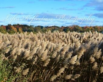 Indian Grass, Nature Photography, Wall Decor, Fine Art, Home Decor, Landscape Photograph
