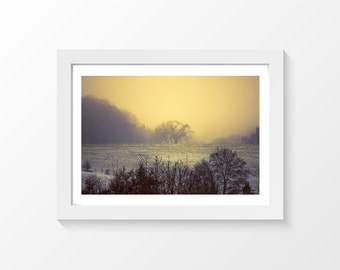 """A little bit more of winter / Trees snow field photo printable art wall art home decor downloadable art to print yourself / A3 and 11"""" x 17"""""""