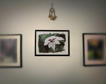 Original Watercolour ~ Gladiolus : wildflower series