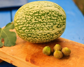 Angel's hair pumpkin, Figleaf Gourd, Black-seed squash, Heirloom squash  Seeds grown in Bulgaria