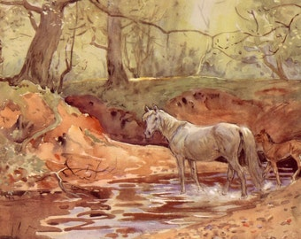 1948 horse print mare and foal new forest by lionel edwards free UK shipping