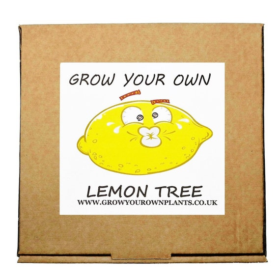 Plant from seeds grow your own lemon tree by for Can i grow a lemon tree from lemon seeds
