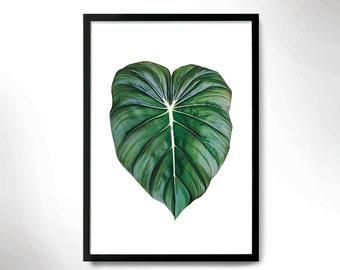 Beautiful Botanical Print, tropical leaf poster, leaf photo, Botanical poster.