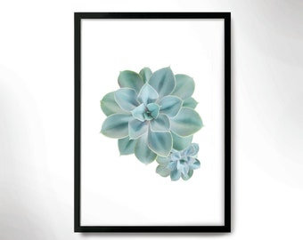 Beautiful Botanical Print, Cactus poster, Cactus photo, Botanical poster.