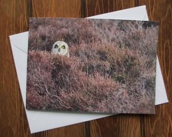 Wildlife Greetings card C6 - Owl