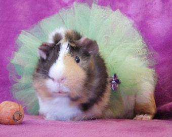 Fabulously Floral Tutu for Small Pets