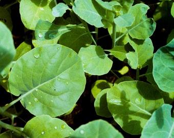 Leaves I | 35mm