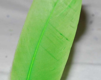 Bright Green Quill Craft Feathers