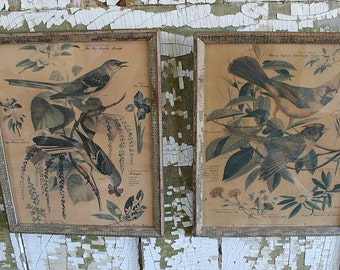2 VINTAGE BOTANICAL PRINTS-Flora and Fauna-Shabby Cottage Boho