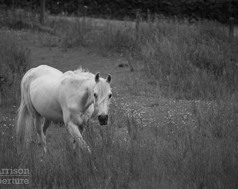 White Horse Print Black and White Photograph Wall Art