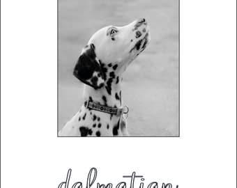 Mounted Dalmatian Print