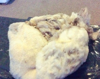 Raw Shetland Sheep Fleece