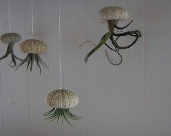 Green Hanging Air Plant Jellyfish