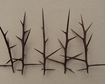 Honey Locust Thorns - set of 5 large