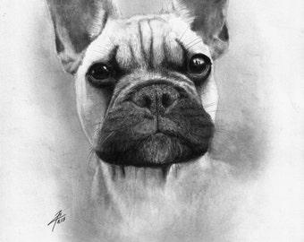 Dog, original drawing by evgeniyfill82, 8 x 12 inch, graphite on paper