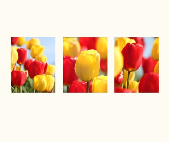 Flower Photography, match set of Three red and yellow tulips photographs floral photography red wall art flower art - Yellow and Red Tulips