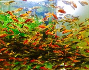 Fish a plenty